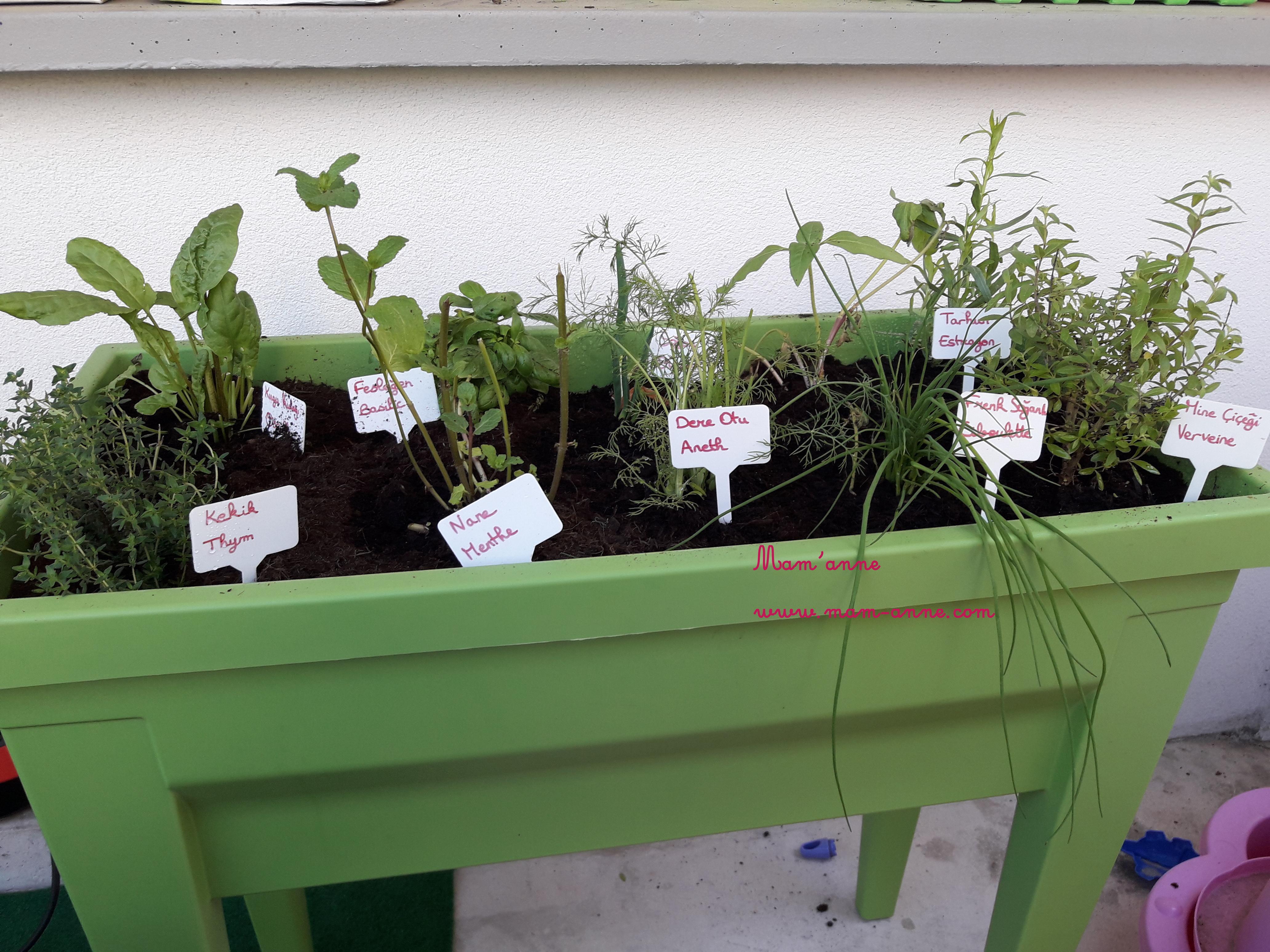 activité jardiner enfant jardinière aromates plantes arrosage nomenclature herbes aromatiques printemps été