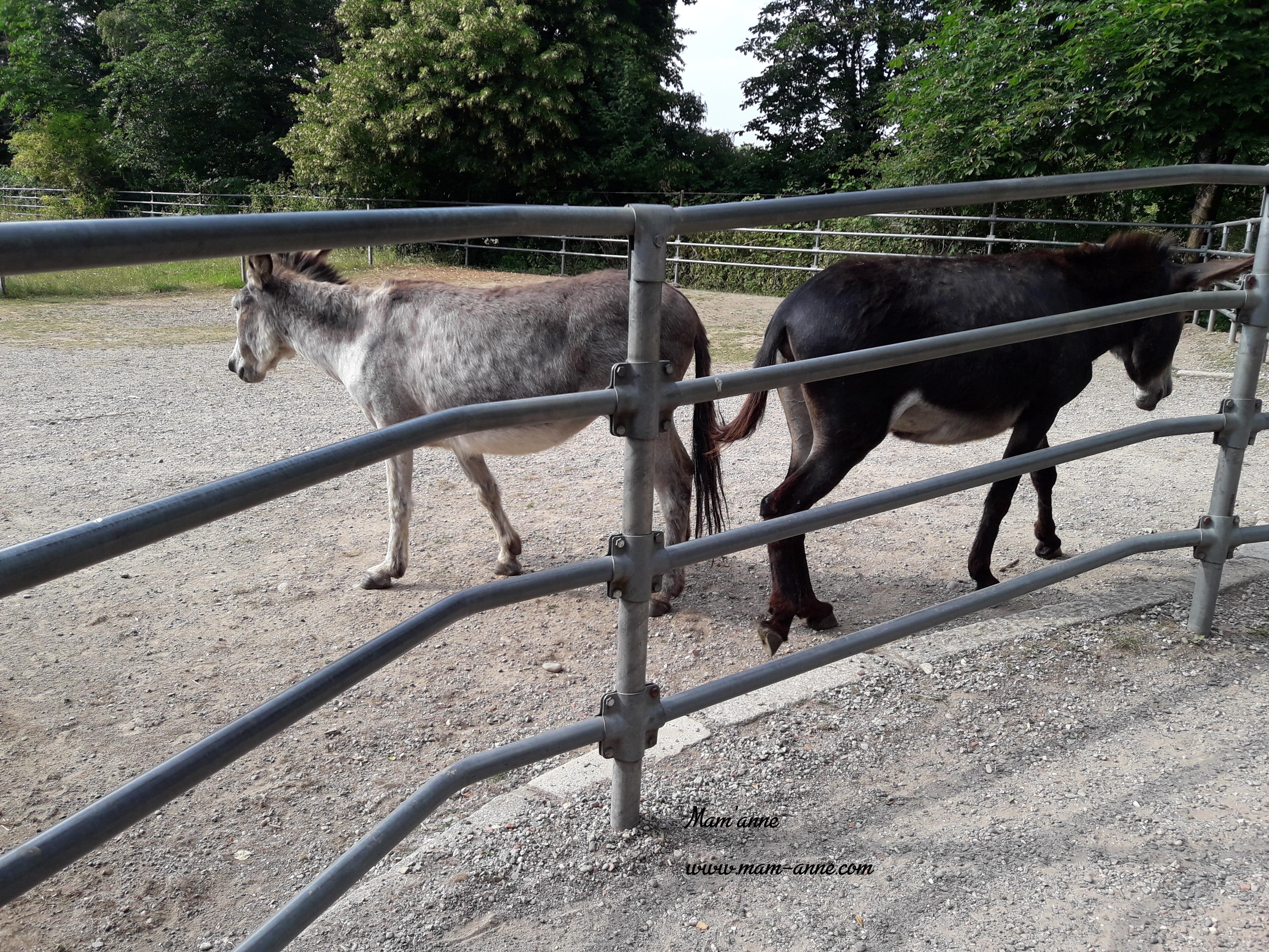 anes parc animalier mundenhof freiburg