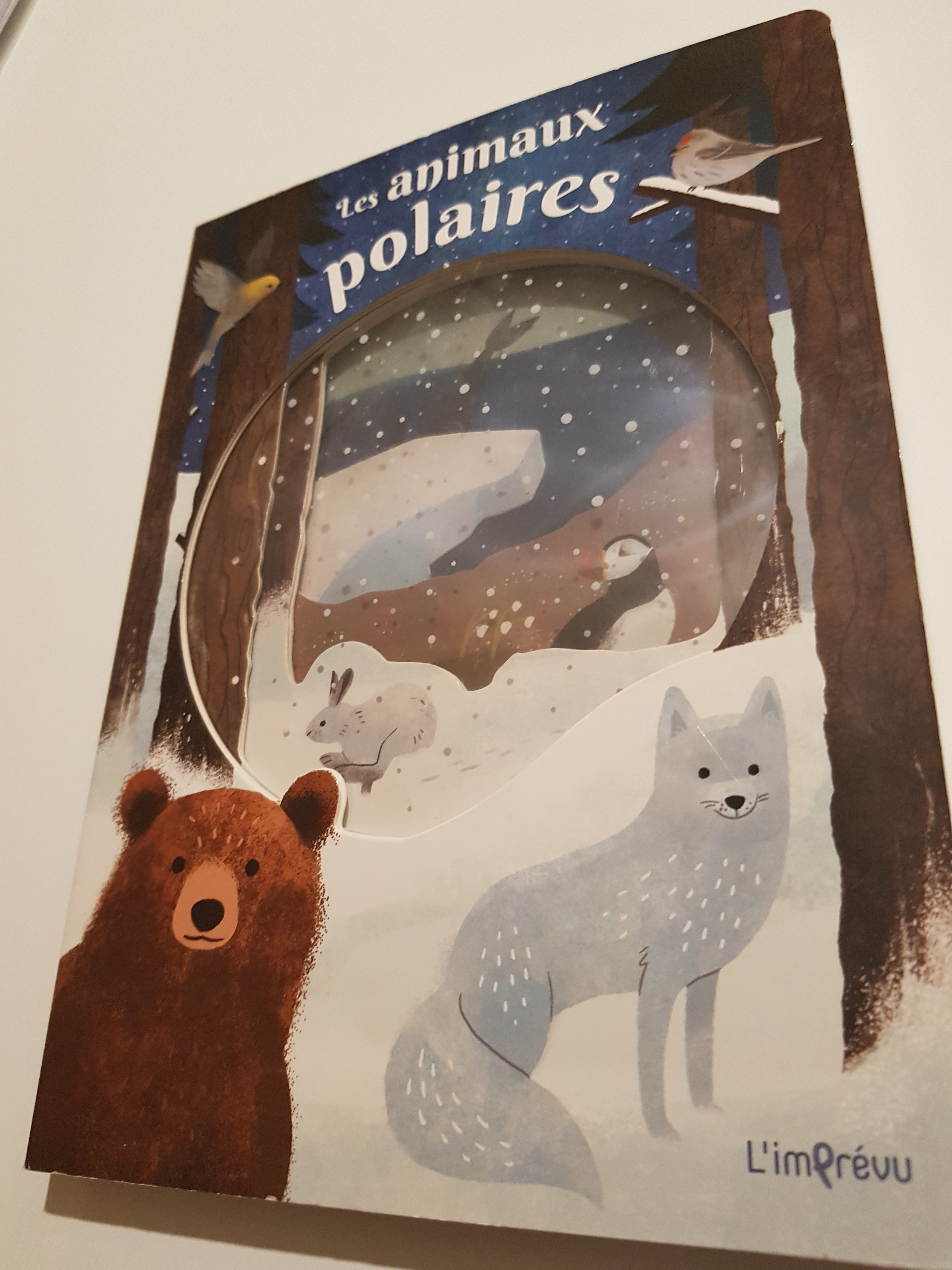 animaux banquise livre enfant