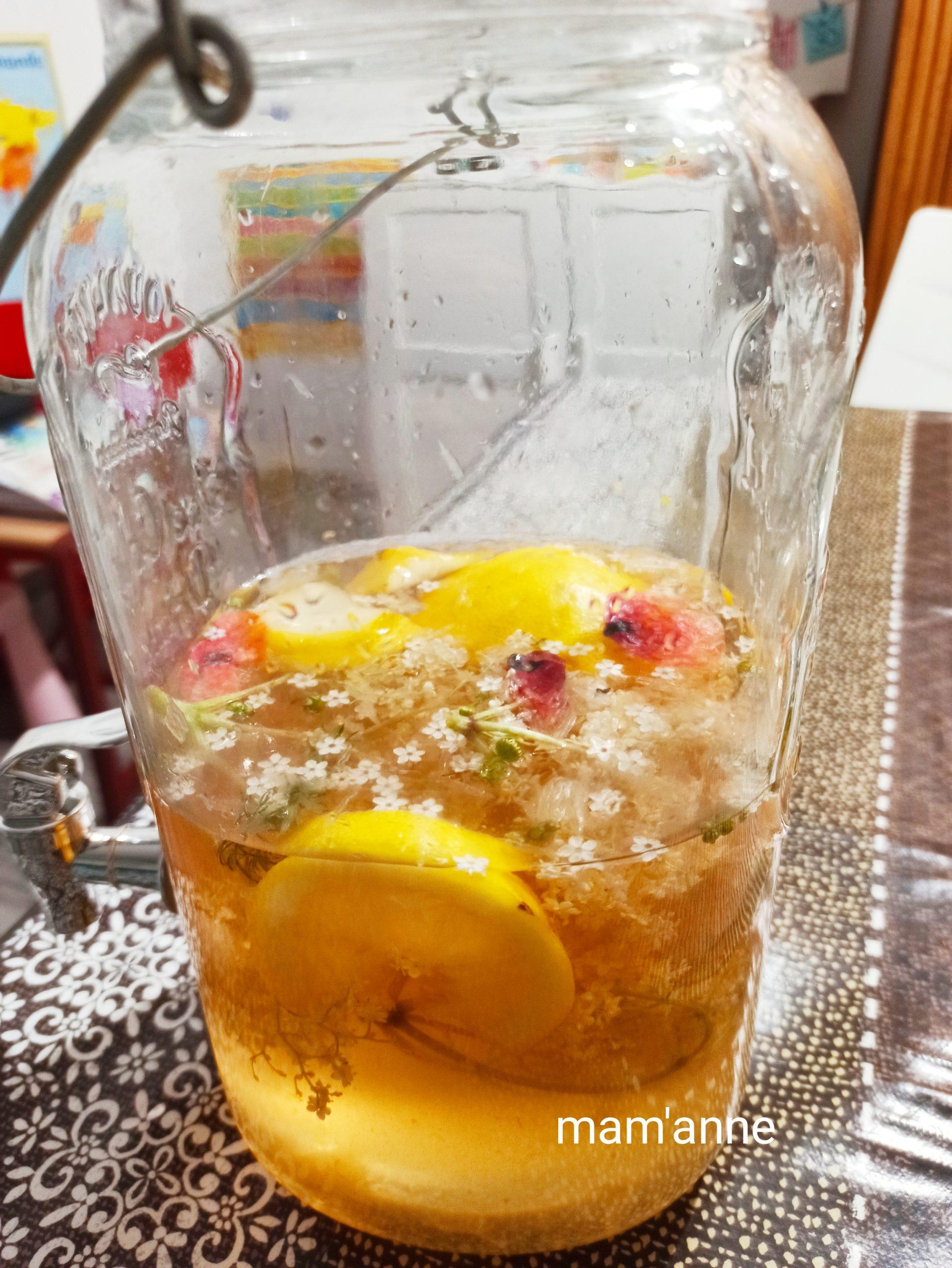 limonade fleurs sureau